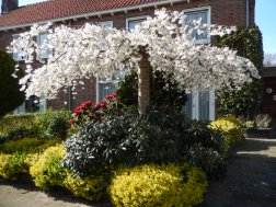 Spring in Doesburg