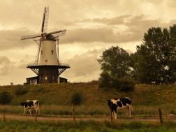 Typically Dutch (Veere)