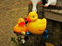Giant ducks in Hindeloopen!